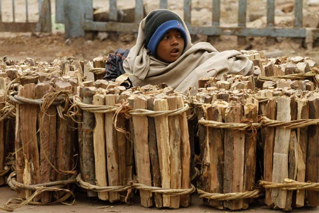 کودک هیزم فروش هندی
