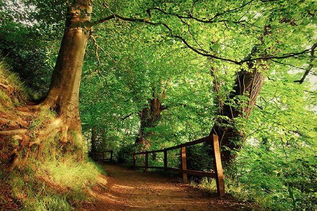 عکس+زیباترین+جنگل+های+دنیا