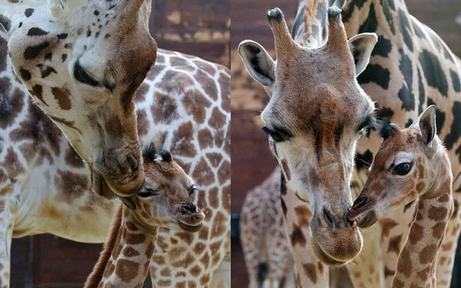 باغ وحش لایپزیک آلمان