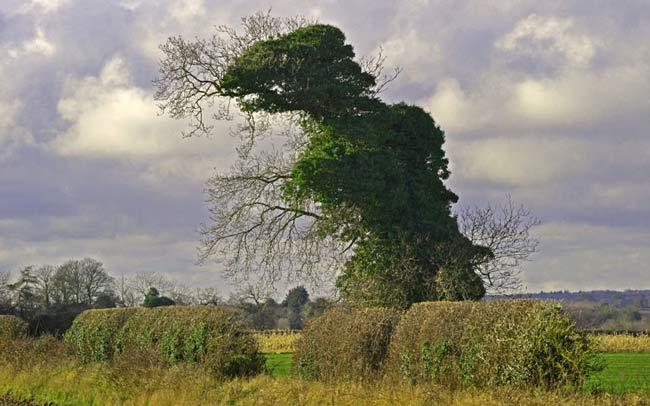 درختی شبیه به دایناسور