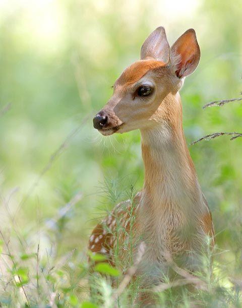 دنیای زیبای حیوانات (عکس)