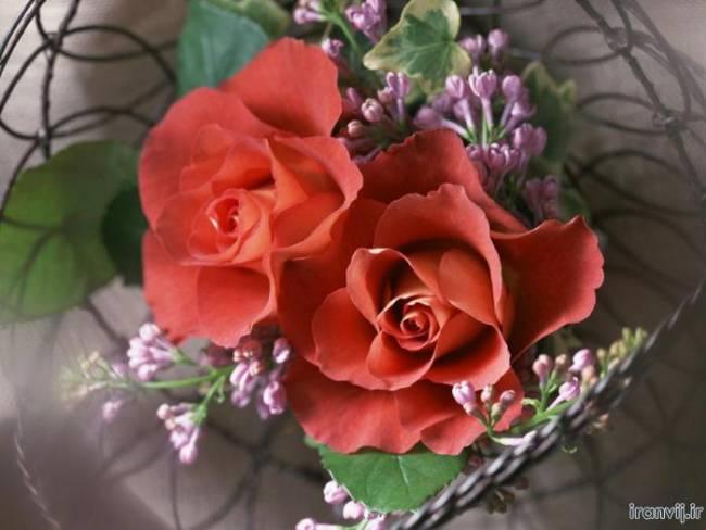 نقاشی گل و زیباترین نقاشی ها از انواع گل های زیبا   تصاویر