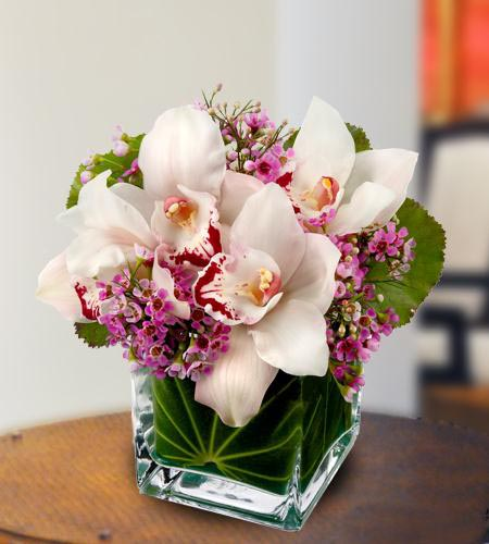 گرانترین گل در ایران