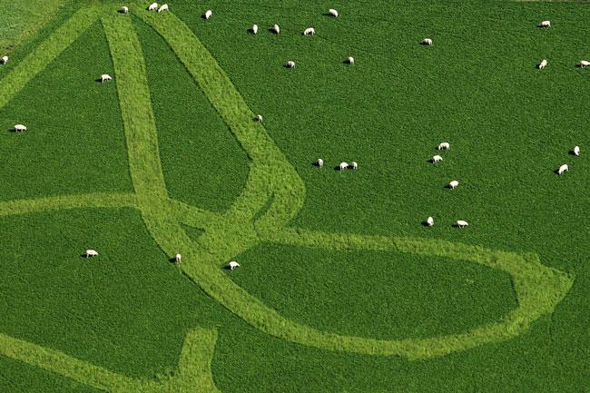 چرای گوسفندان