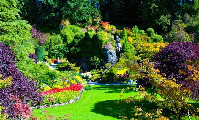 تصاویر گلهای زیبای طبیعت
