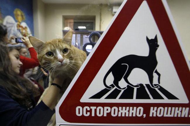 کافی شاپ گربه ها