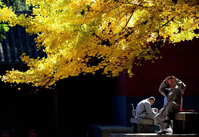 طبیعت پاییزی