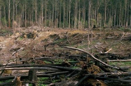 تخریب جنگل