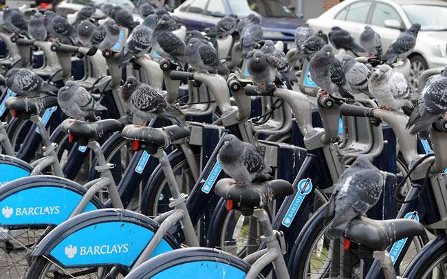 پارکینگ دوچرخه