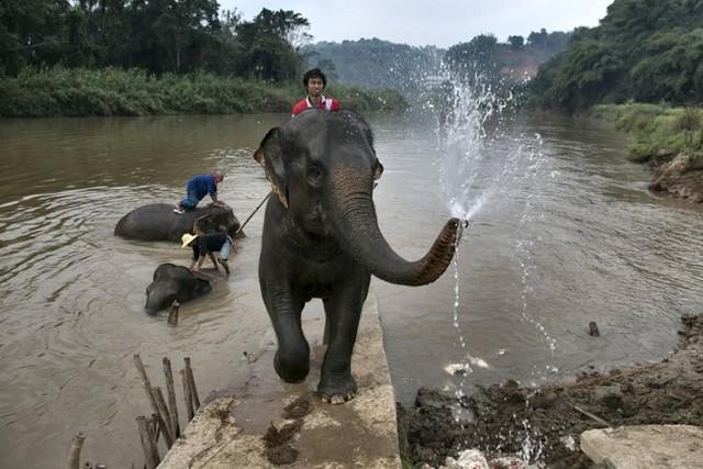 حمام فیل ها در تایلند