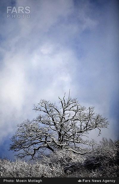 عکس طبیعت گرگان