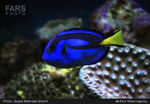 ماهی های تزئینی
