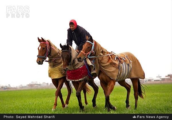 پرورش اسب ترکمن (عکس)