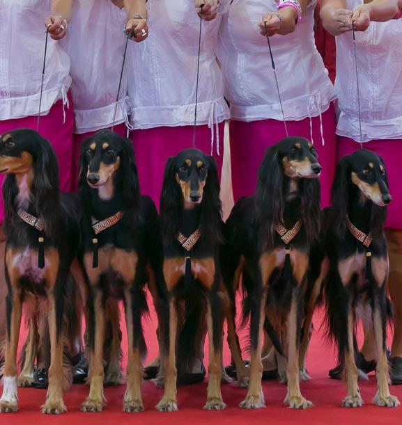 نمایشگاه سگ