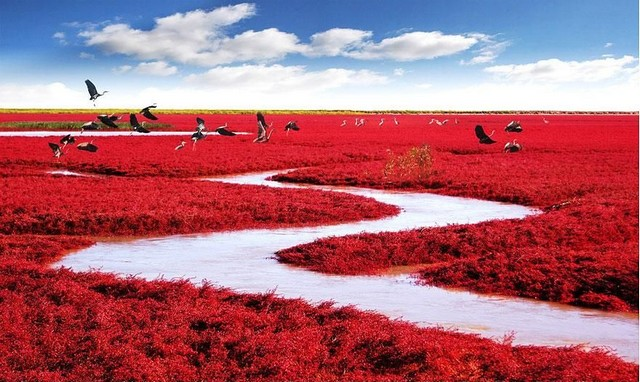 ساحل قرمز، پکن، چین