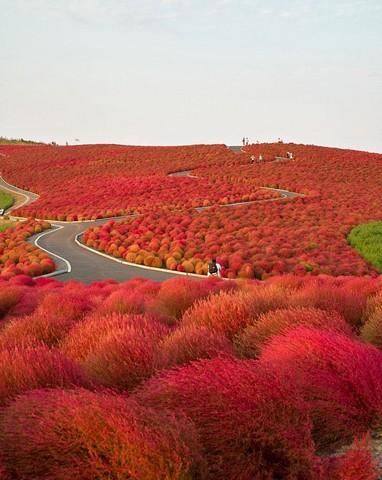پارک ساحلی هیتاچی، ژاپن