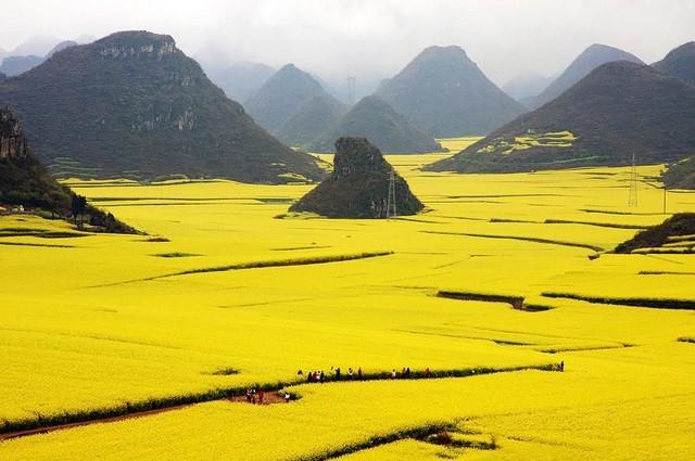زمین های گل  گلزا ، چین