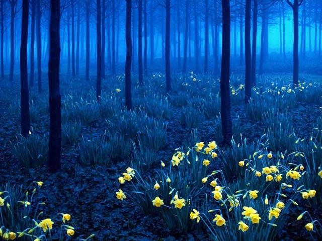 جنگل سیاه، آلمان