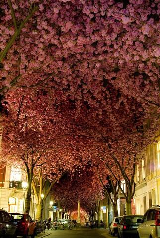 خیابان بن، آلمان