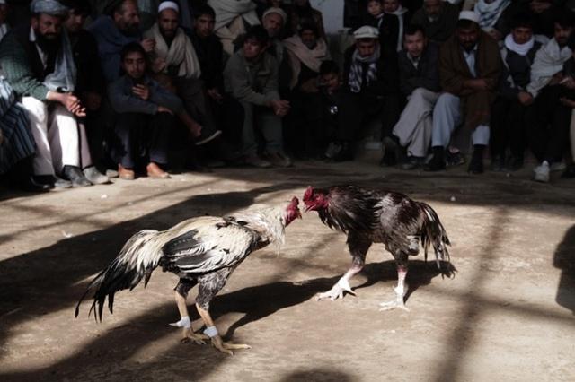 عکس های از جنگ افغانستان