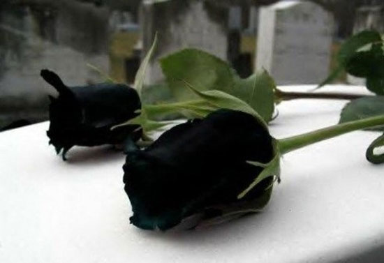 عکس+عجیب+گل