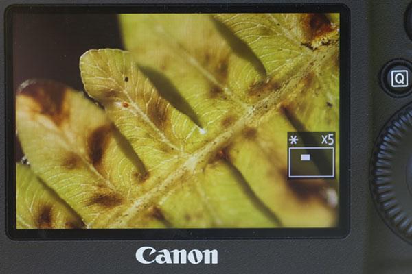 چطور عکس های کلوزآپ خیره کننده ای بگیریم