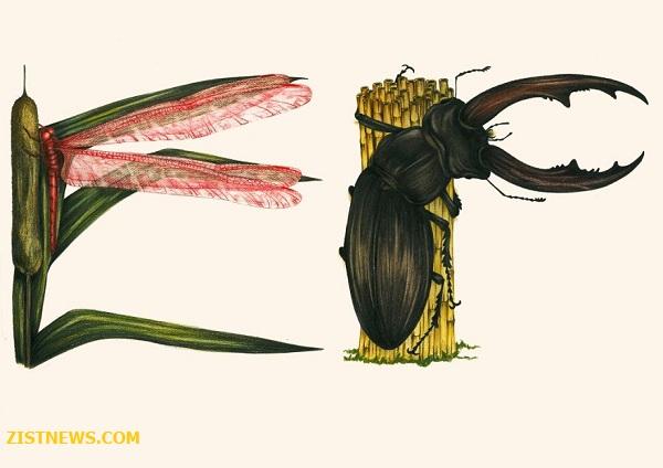 الفبای حشرات(عکس)