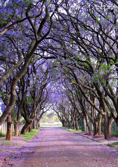 جادویی ترین کوچههای درختی! (عکس)