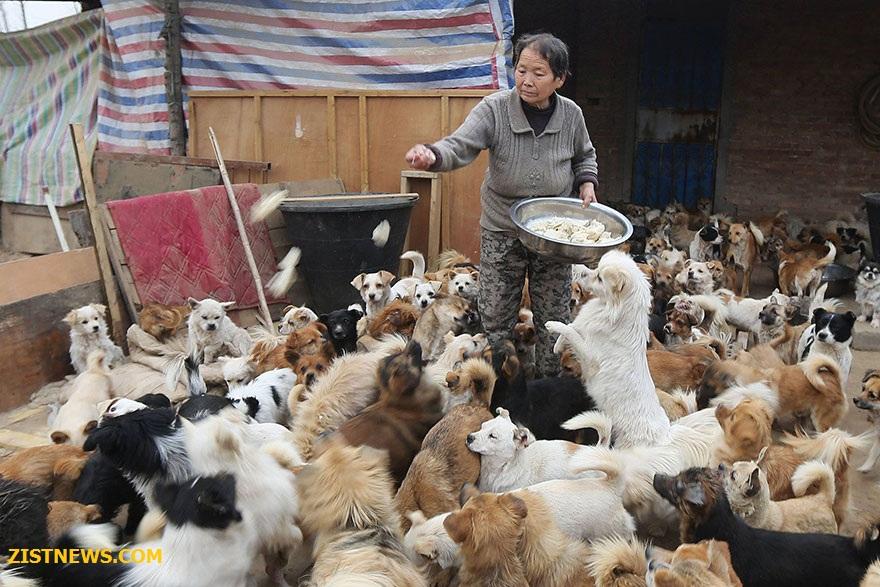 مرکزی برای نگهداری سگ ها(+عکس)