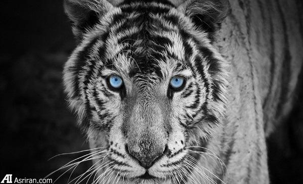 جهشهای رنگی غیر معمول در حیات وحش