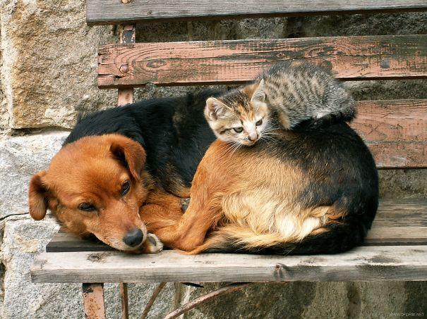 استراحت متفاوت!(عکس)