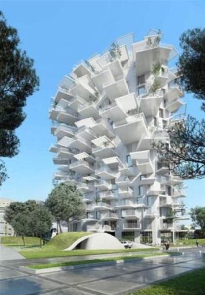 درخت سفید 56 متری در فرانسه (+عکس)