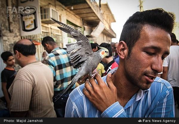بازار پرنده در بندرعباس (عکس)