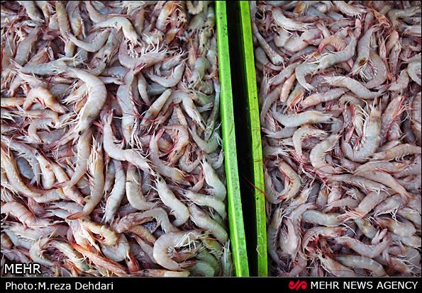 بازار ماهی فروشان آبادان (عکس)