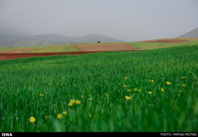 طبیعت پالنگان - کردستان (عکس)