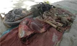 درگیری مسلحانه در پارک ملی گلستان/ محیطبانان جان سالم به در بردند
