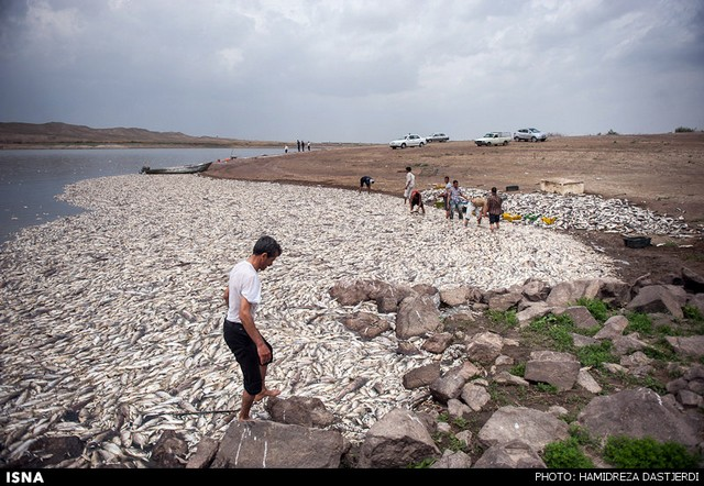 مرگ ۲ میلیون ماهی در سد فشافویه