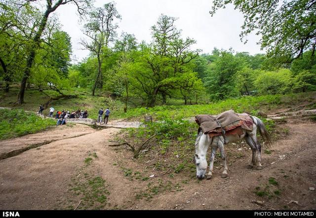 طبیعت قلعه رودخان - گیلان (عکس)