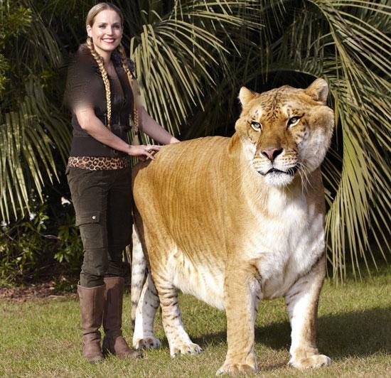 بزرگ ترین گربه سان جهان (+عکس)