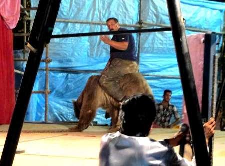 آزار حیوانات در سیرک
