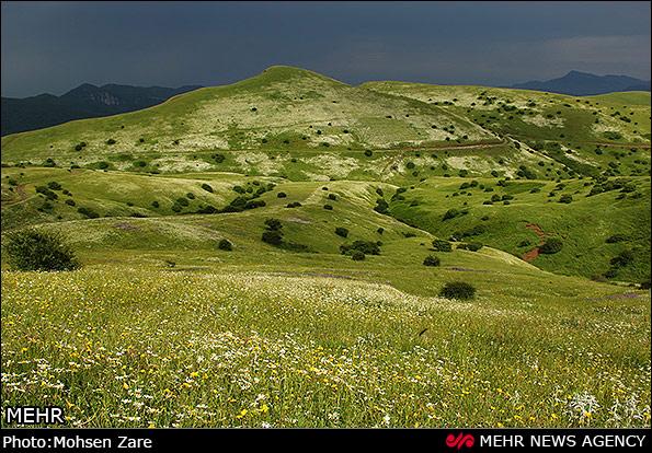 طبیعت بهاری  گردنه   حیران  ( عکس )