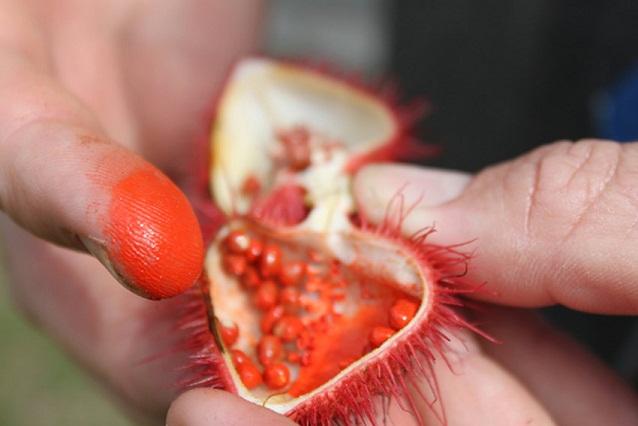 درخت رژلب در منطقه آمازون (+عکس)