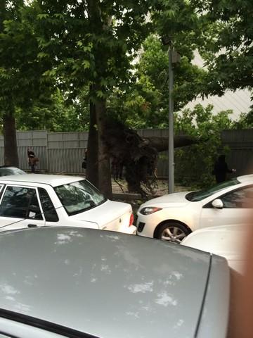 گزارش تصویری از طوفان تهران