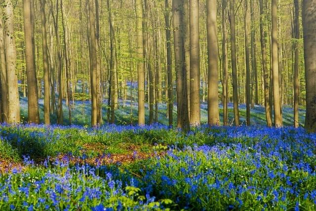 دیدنی ترین تصاویر از جنگل آبی