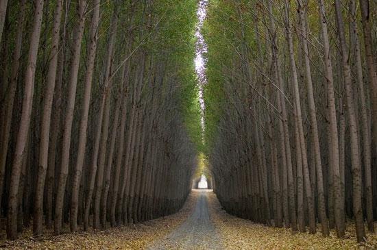 مزارع عظیم چوب در آمریکا (+عکس)