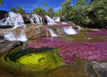 رودخانه ۵ رنگ کلمبیا (عکس)