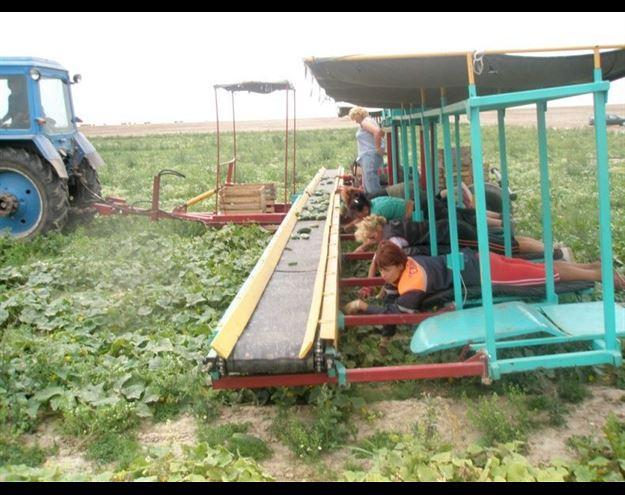 عکس های جالب و زیبا شغل جدید اخبار کشاورزی اخبار جالب