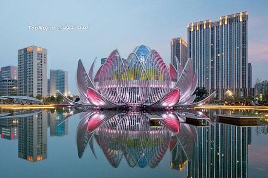 معماری ملهم از گلهای نیلوفر آبی (عکس)