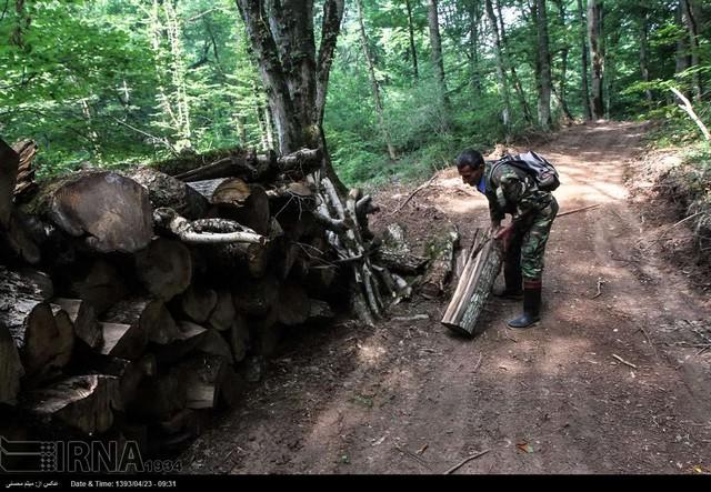 یک روز با قرق بان جنگل (عکس)