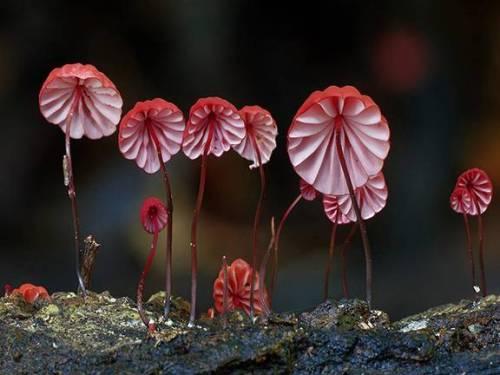 دنیای شگفت انگیز قارچ ها (عکس)